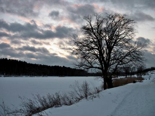 #zima #śnieg #zalew #niebo #drzewo