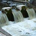 Wypływ Cybiny ze Stawu Olszak. #rzeki
