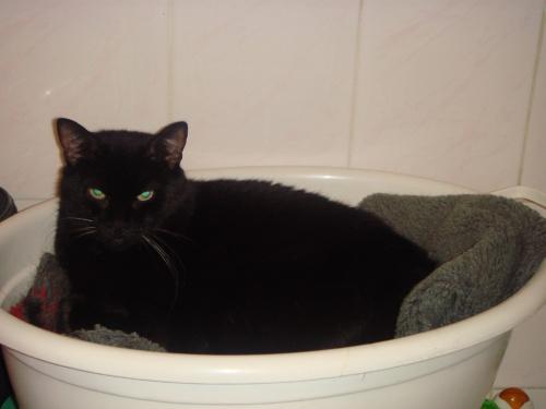 ... kotka Kropeczka wylegująca się w misce w łazience, oboje uwielbiają to miejsce