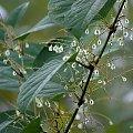 zielony to kolor nadziei ... #NadRzeką #rdest #rośliny