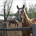 z rodzinnych stron #jezioro #konie