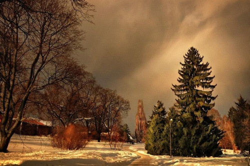 Botanisk Hage - Oslo #Oslo #BotaniskHage #winter #chmury #zima #snow #clouds #śnieg #krajobraz #lanscape