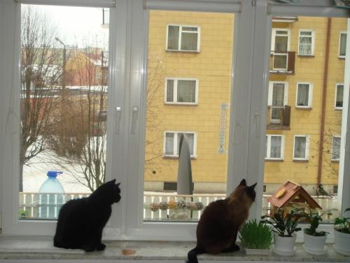 ... koty na czacie :)