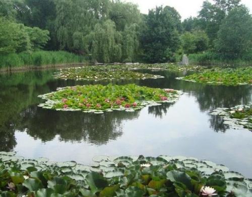 Staw w ogrodzie botanicznym.