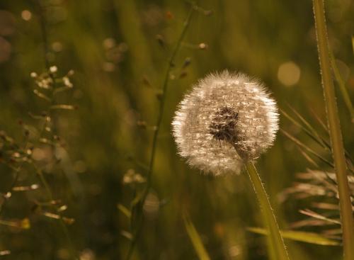 #łąka #natura
