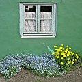 #okno #kwiaty #wiosna