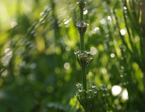 #rosa #trawa #natura