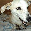 On jest wspaniały!!! #choroba #pies #walka