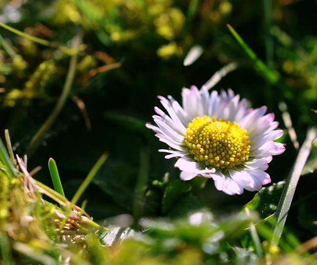 6.03.2010 wczoraj wiosna a dzis znowu zima,snieg i mrozny wiatr za oknami gwizdze... #wiosna #zima #macro