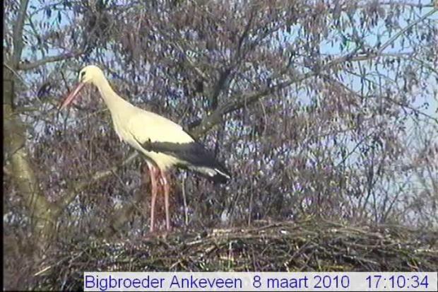 Ankeveen/nl
