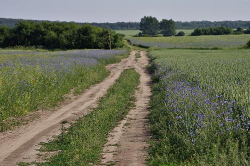 """pola już tak nie wyglądają, ale ciągle mam """"tyły""""... :)"""