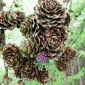 #lumix #makro #owady #rośliny