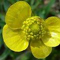 Zdjęcia #lumix #makro #owady #rośliny