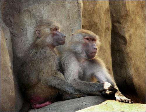 pogodzeni z losem (?) #zwierzęta