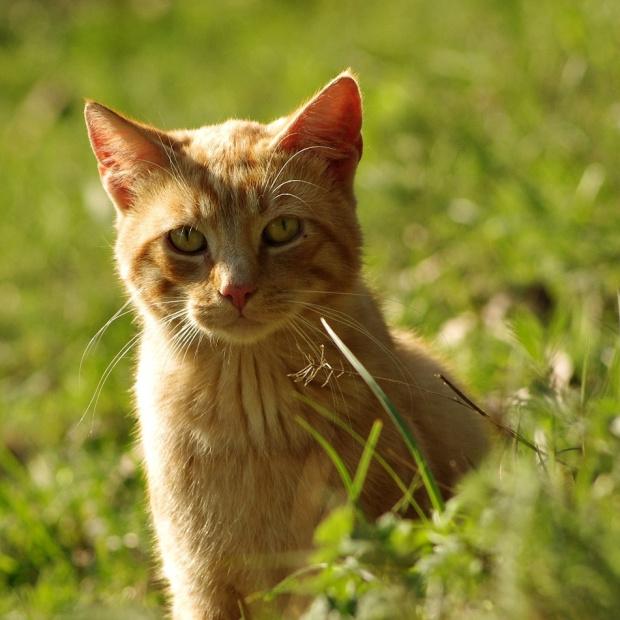 jeszcze bacznie obserwujący mnie tata- kot...