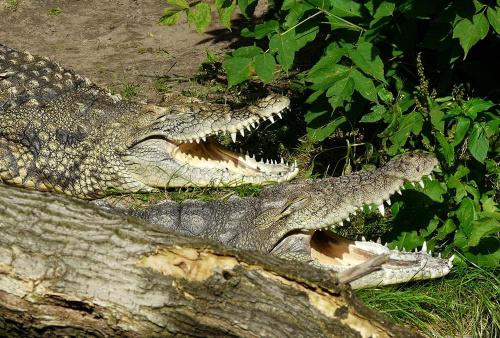 szczery śmiech #zwierzęta #przyroda