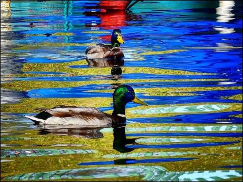 refleksy #przyroda #zwierzęta