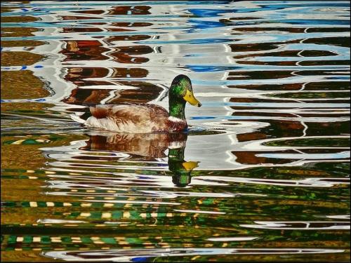 refleksy wodne #zwierzęta #przyroda