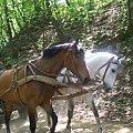 #chata #wieś #skansen #Sierpc #natura #przyroda #konie #kon #koniki