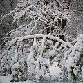 Polska zima... #zima #pogoda #śnieg