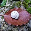 Danie czasu #FaunaIFlora #Jura #śmieszne #MartwaNatura