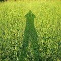 autofoto #FaunaIFlora #Jura #MartwaNatura #śmieszne