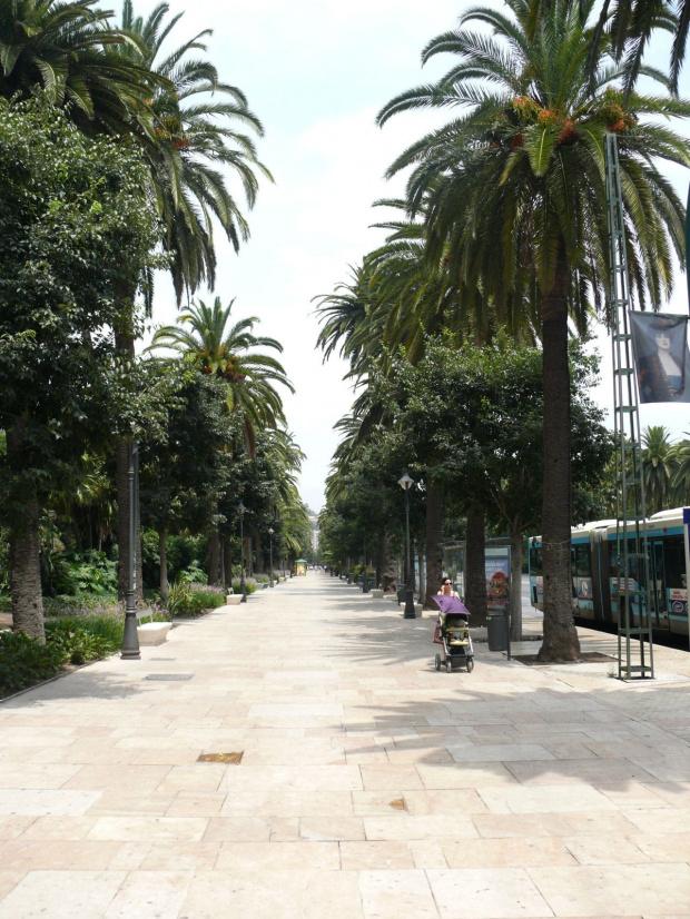 Malaga - aleja palmowa Paseo del Parque #Andaluzja