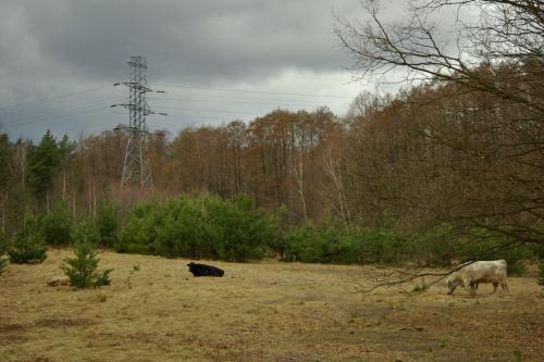 z dzisiejszego spaceru po lesie- znowu spotkałam to samo stadko- tym razem na leśnej łączce #las #zwierzęta