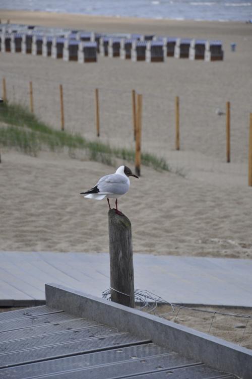 #plaża #bałtyk #świnoujście #mewa