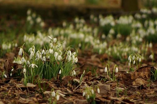 trzeba się nimi nacieszyć :) #kwiaty #przebiśniegi