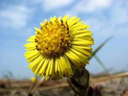 wczoraj dałam trzy fotki a dzisiaj jednej brakuje to uzupełniam, kwiatkowo też było