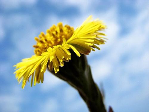 dla Leśnej Ani za zgłoszenie i wiarę w cuda :) rzeczywiście jakimś cudem kwiatek w naj wylądował :))