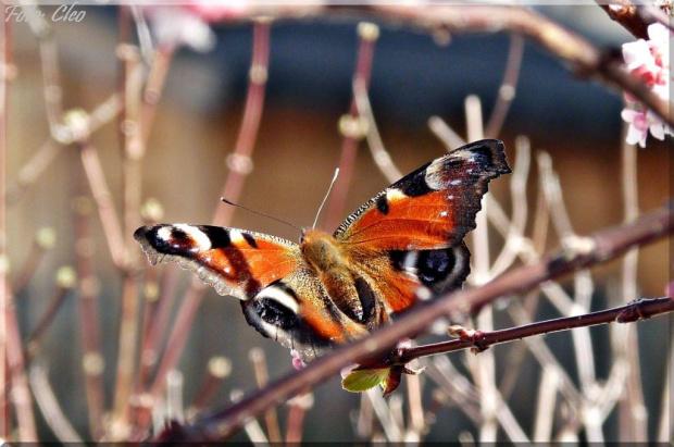I motylki poczuly ten swiezy zapach kwiatkow, wiec przylecialy do nich i sie delektowaly...:)