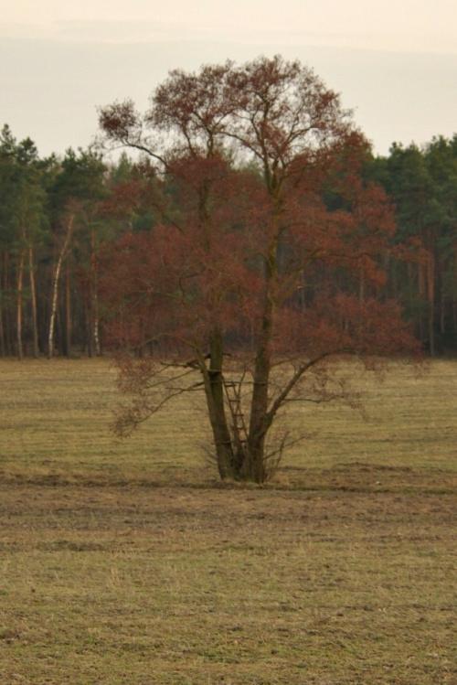 drzewo- ambona #drzewo