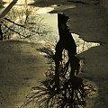 #kałuża #drzewo #odbicie