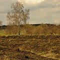 #wiosna #drzewo #niebo #brzoza #łąka #natura #kwiecień