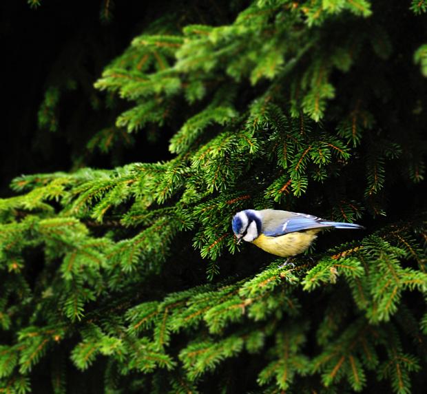 wyglada mi na samobojce przed skokiem..:)) #ptaki #przyroda #wiosna