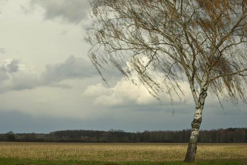http://godsmackk.wrzuta.pl/audio/68f4mg5edas/fryderyk_chopin_-_marsz_zalobny_marche_funebre_sonata_b_-_moll #brzoza #pola #niebo #wiosna