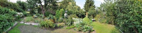 Panorama ogródka. #panorama #ogródek #rośliny #kwiaty #kwiatki