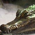 Jeśli nie chcesz mojej zguby... #arietiss #fauna #gady #krokodyl #zwierzęta