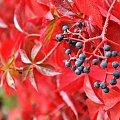 #Przyroda #Gliwice #Październik