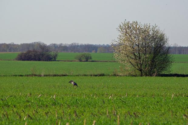 #pole #wiosna #żuraw