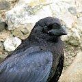 Szkoda że te ptaki nie są na wolności?! #kruk #lezajsk #lezajsktm #leżajsk #orzeł #ptaki #sokoły #sokół #sowa