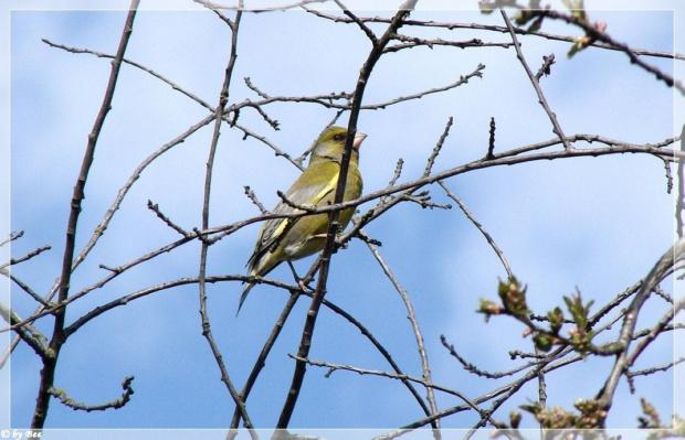 #ptaki #wiosna
