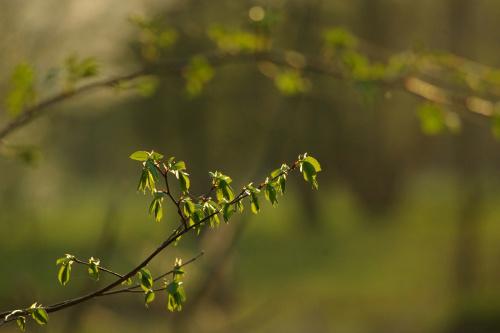 #wiosna