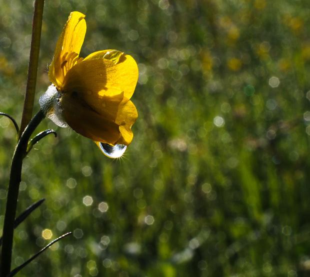 rano boso po rosie...:)) #natura #wiosna #bokeh