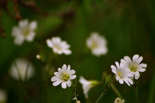 #wiosna #kwiaty #RogownicaPolna