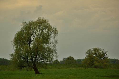 #łąki #drzewa #niebo