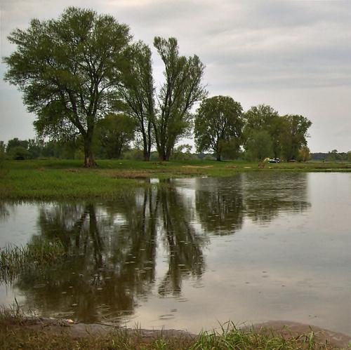 #Odra #rzeka #wiosna #maj #drzewa
