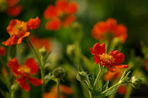 #kwiaty #maj #wiosna